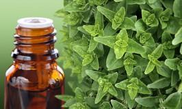 Oregano Oil – Multipurpose And Effective