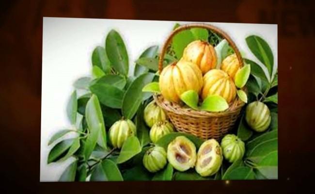 Another name for garcinia cambogia