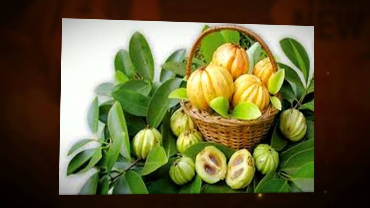 Garcinia Cambogia- What Exactly Does It Do?